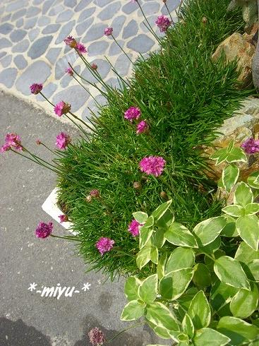 中庭に咲いてたお花.:*・゚☆.。.:*
