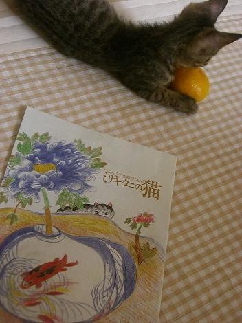 ミリキタニの猫パンフ♪