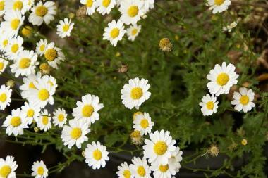 よく見かけるお花♪*