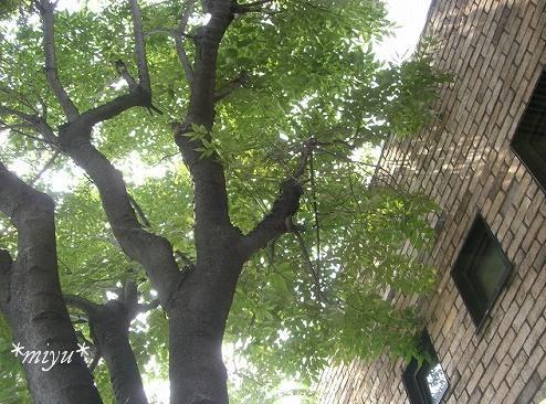 夏の木々+。*゚¨゚゚・*:..。