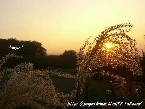 秋まっ盛り.:*・゚☆.。.:*
