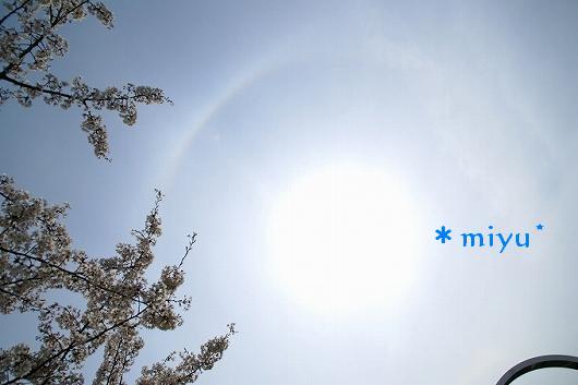 桜とハロー.:*・゚☆.。.:*
