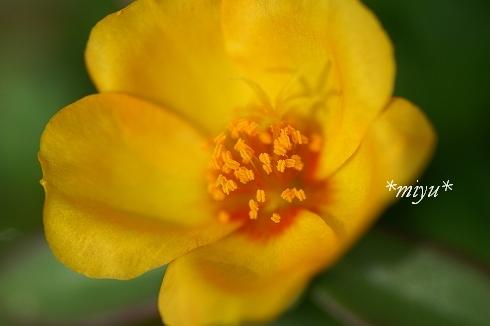 咲いた咲いた。.:*・゚☆.。.:*