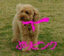 ぷりピンク