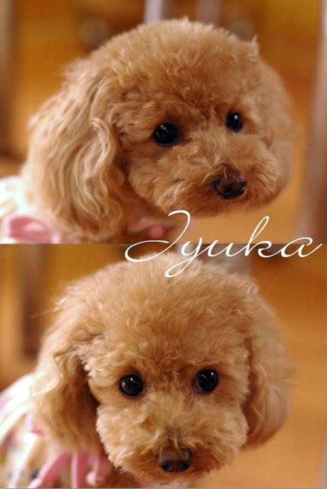 Jyuka