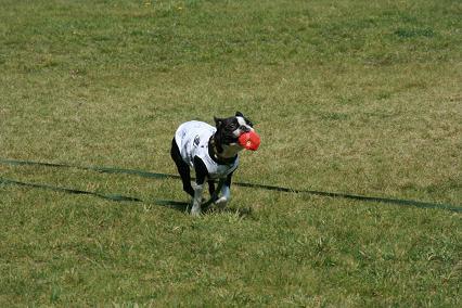 ボール遊びカルビ