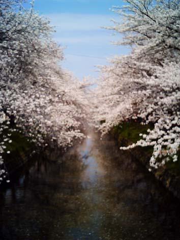 トイデジ桜