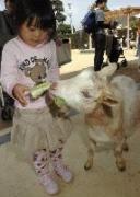 広島市安佐北区の広島市安佐動物公園で