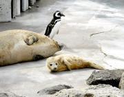 鶴岡市立加茂水族館で