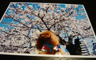 マロンちゃんカード