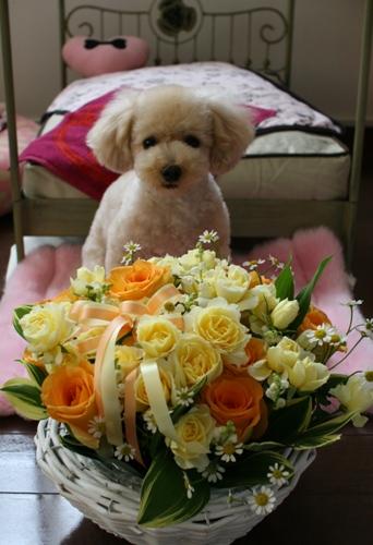 お花with古都0429