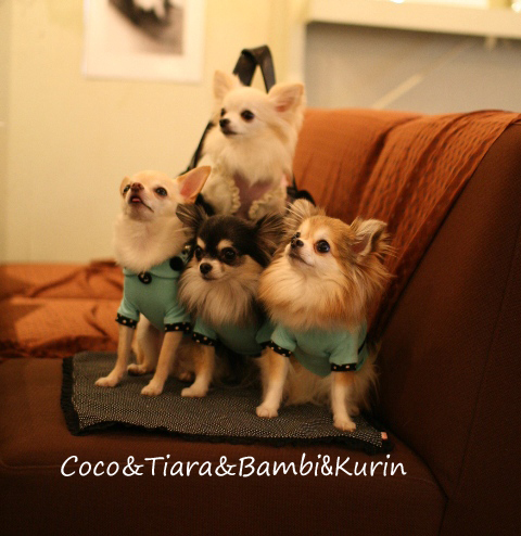 Coco&Tiara&Bambi&Kurin