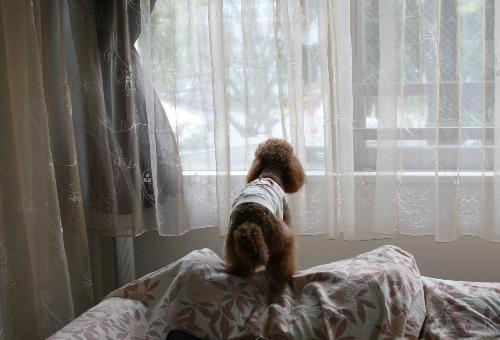 スーちゃん@我家の窓