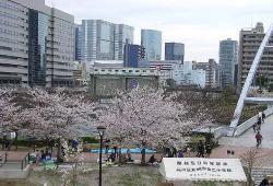 08sakura5