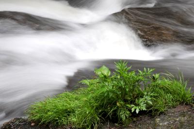 竜頭の滝② YS0_9278
