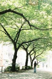 木もれ日の声