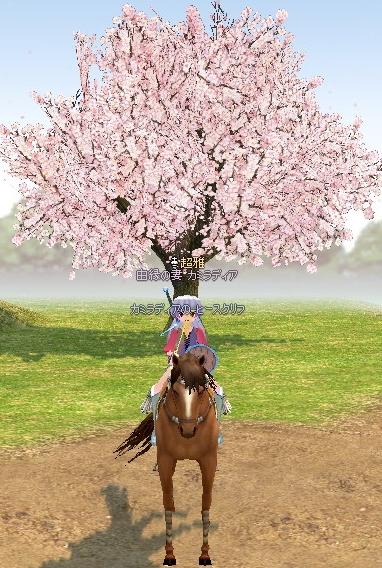春です^^