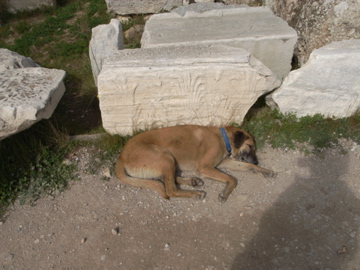 dogs in Athens 6