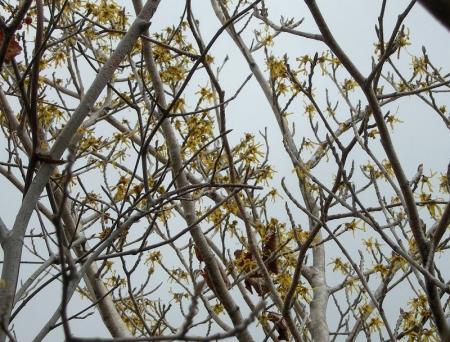 2006.3.19多良岳 005