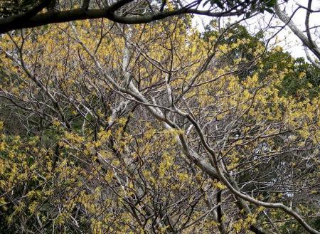 2006.3.19多良岳 012