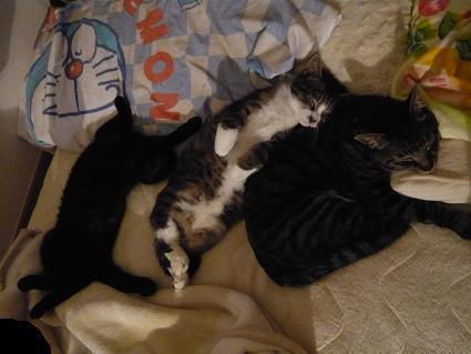 ネコ団子3 小