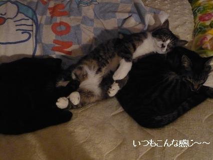 寝るネコ 小