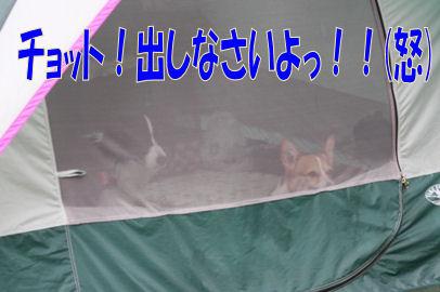 015_20080721202600.jpg