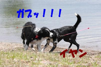 030_20080616153959.jpg