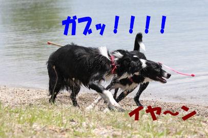 031_20080616154014.jpg