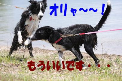 037_20080616154532.jpg