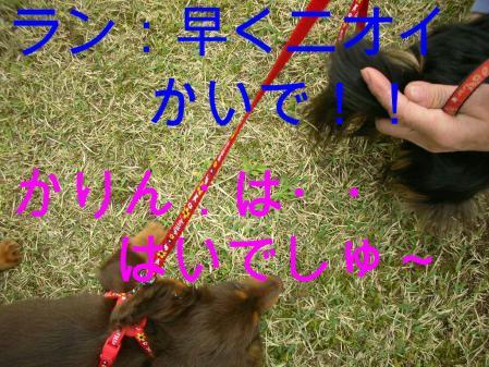 コピー ~ DSCN3660