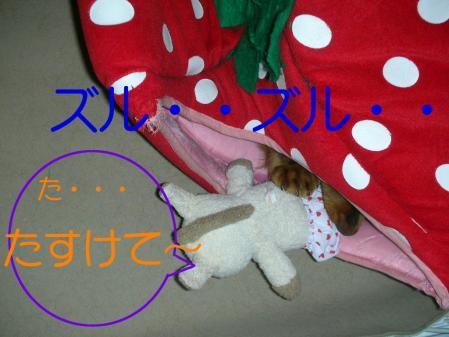 コピー ~ DSCN3520