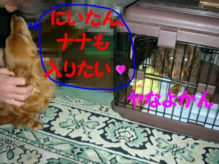 コピー ~ DSCN3926