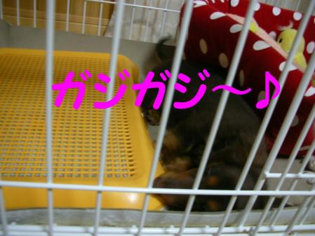コピー ~ DSCN4447