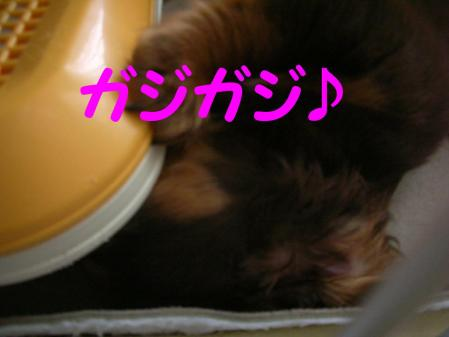 コピー ~ DSCN4518