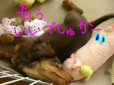 コピー ~ DSCN5063