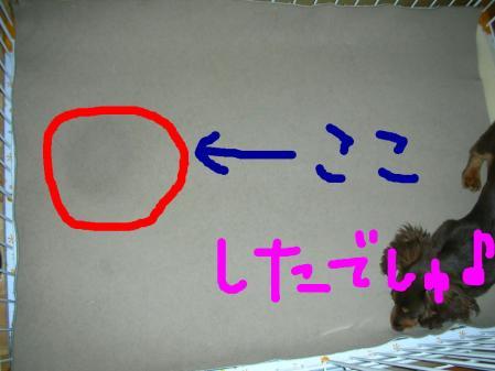 コピー ~ DSCN5664