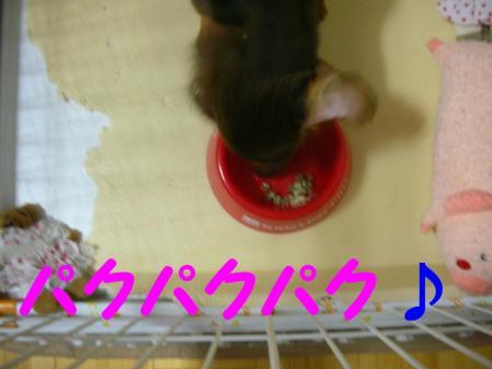 コピー ~ DSCN6296