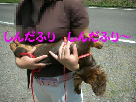 コピー ~ DSCN6438