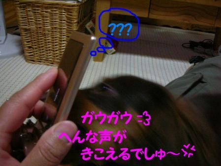 コピー ~ DSCN6848