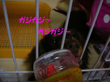 コピー ~ DSCN7057