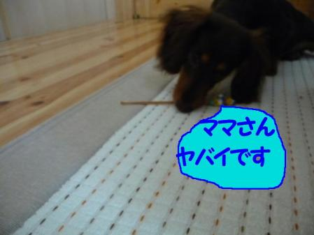 コピー ~ P1000794
