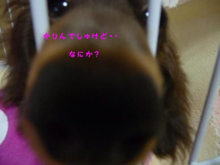 コピー ~ P1000969