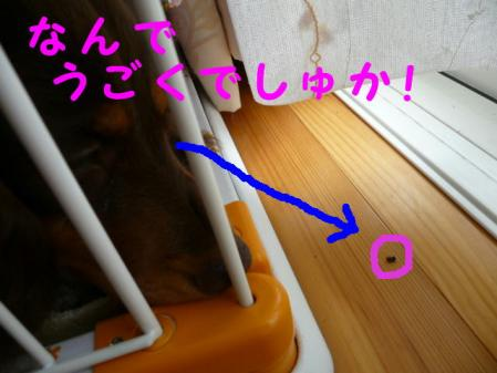 コピー ~ P1010097