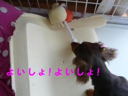 コピー ~ P1010219