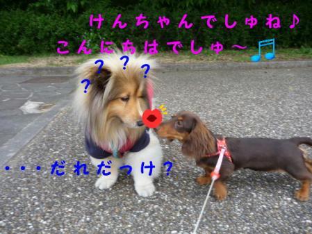 コピー ~ P1010511
