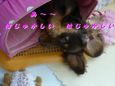 コピー ~ P1010753