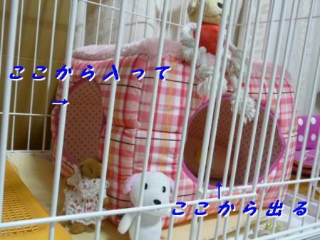 コピー ~ P1020206