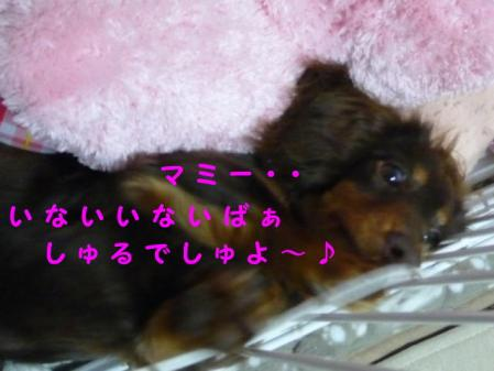 コピー ~ P1030084