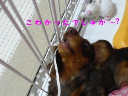 コピー ~ P1030092